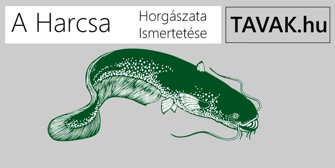 Harcsa horgászata és ismertetése